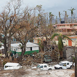 Coralie Giese, CDC, CC BY 2.0. Damaged trees and buildings in Haiti after Hurricane Matthew in 2016.