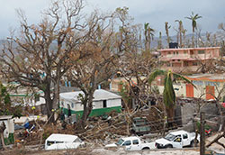 Damaged trees and buildings in Haiti after Hurricane Matthew in 2016