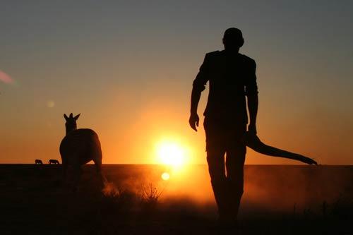 photo of veterinarian and zebra namibia fogarty