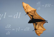 Bat with wings spread soar, mathematical equations display in background
