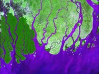 Satellite image of green land, water is purple, shows many rivers