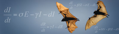 Two bats with wings spread soar, mathematical equations display in background
