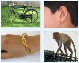 4 sample photos used in Verghese picture-based screening tool used in India, including a bike, ear, bracelet and monkey