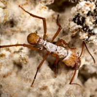 Close up of brown ant