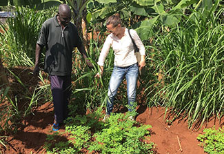 Dr. Carrie Waterman walking with a man in a patch of growing moringa.
