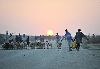 Groups of people and a herd of animals walk along an unpaved toward the sunset.