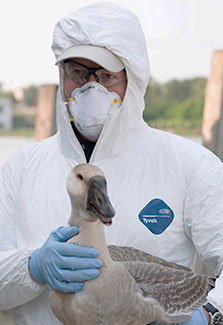 Peter Daszak wearing protective coverall, surgical gloves, mask and safety glasses holds a bird.