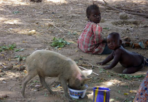 Small pig eats out of bowl on dusty ground, two young children crawl on the ground nearby