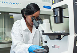 Female researchers works in a lab with a microscope.