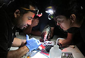 Group of researchers in dark lab wearing headlamps closely examine samples