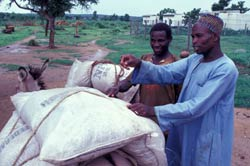 Two men load five large bags of rice onto a donkey, dirt roads in the background
