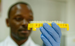 Closeup of researcher wearing gloves closely examining a tray full of samples