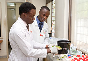 Two researchers in lab coats work in a lab preparing materials.