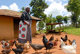 Photo by Boniface Mwangi/Africa Knows. Older woman surrounded by chickens outdoors in front of a building.